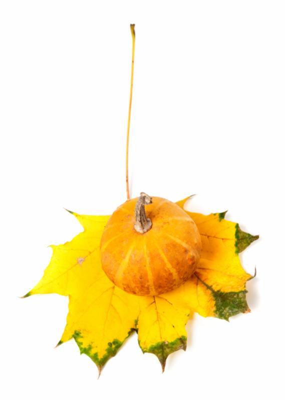 pumpkin_on_a_leaf_2.jpg