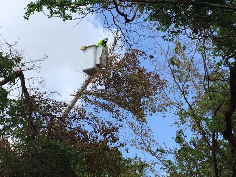cortando ramas