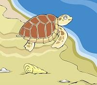 sea turtle NOAA Planet Arcade