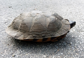 Photo of a turtle by Anne McBride