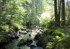 Photo of a stream by Doug Brown