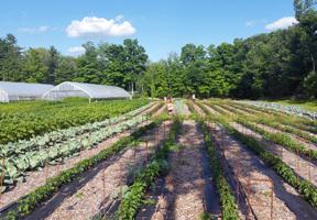 Photo of a CSA farm by Ryan Owens