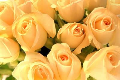 peach-roses-bunch.jpg
