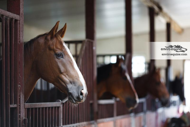 A Better Way to Manage Ulcer Risk in Horses