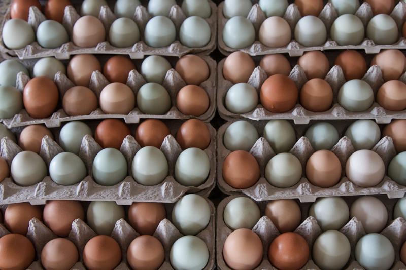 RBR Ag eggs