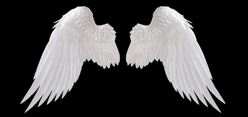 white angel wing isolated on black color