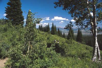 mountain-side.jpg