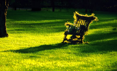 vine-covered-chair.jpg