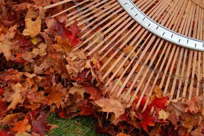rake and leaves