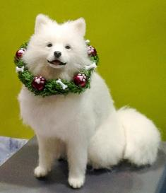 Samoyed by Takumi Takanashi