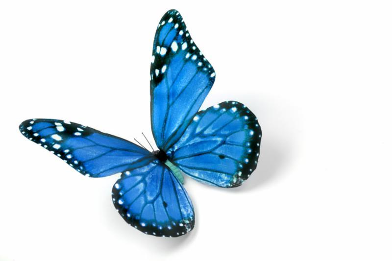 blue_butterfly_2.jpg
