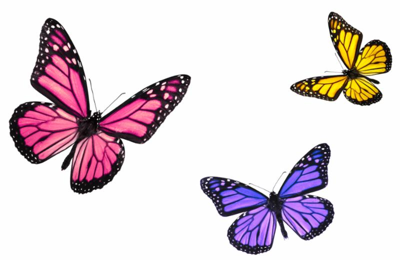 trio_of_butterflies.jpg