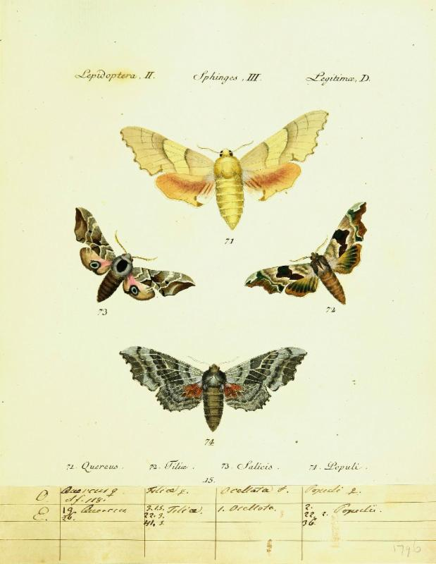 H_bner_s papilio _1796-1841_