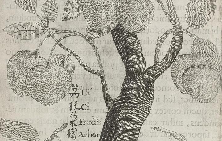 Flora Sinensis