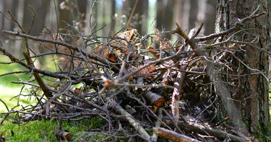 Image of a pile of brush next to a tree in a forest