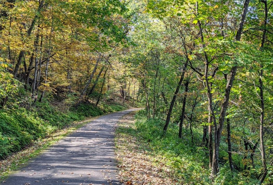 Photo of the Cannon Valley Trail paved path through woods on a summer day