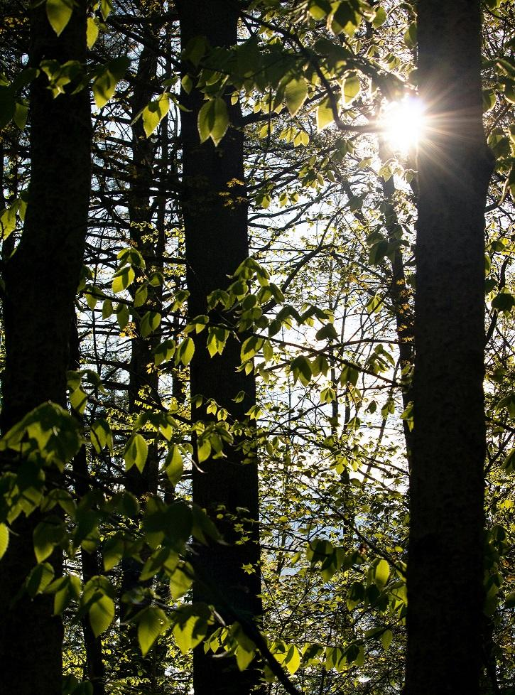 Sunlight shining through backlit trees in a wooded area