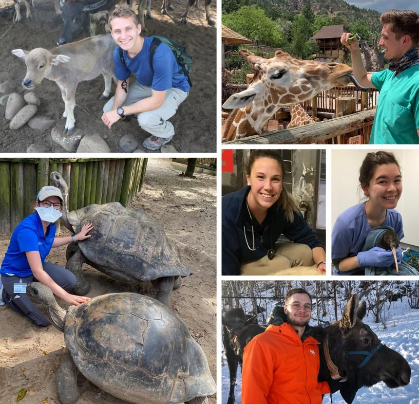 Recent alumni working in wildlife conservation and One Health