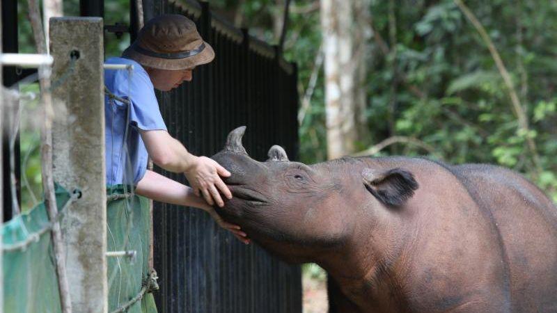 Veterinarian with rhino