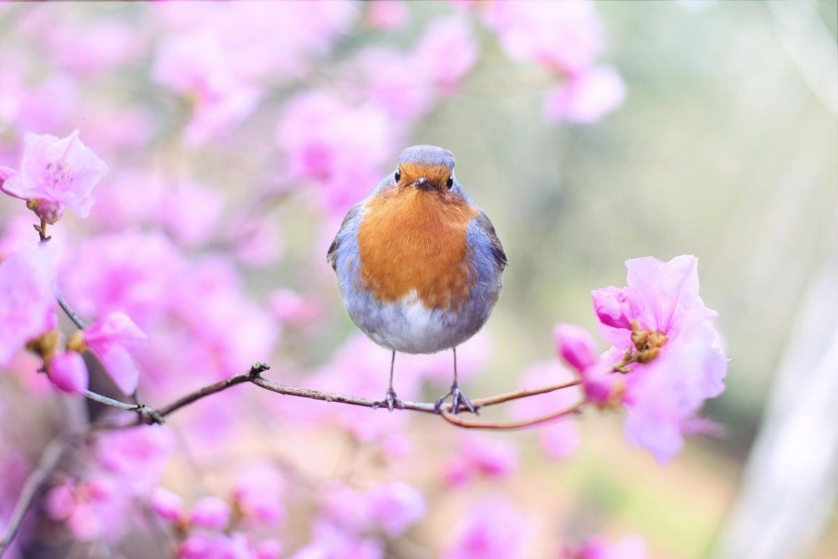 Bird sitting on branch with flowers