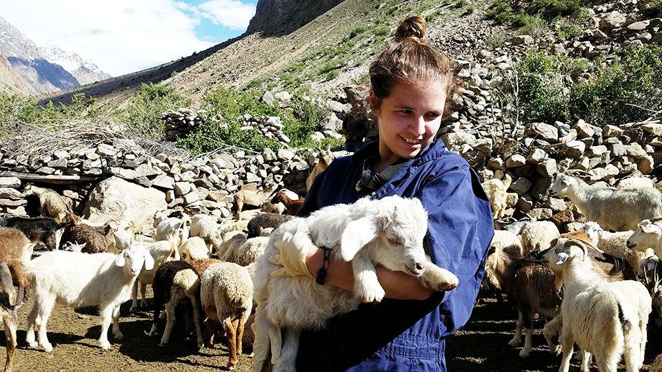 Vet student holding baby sheep