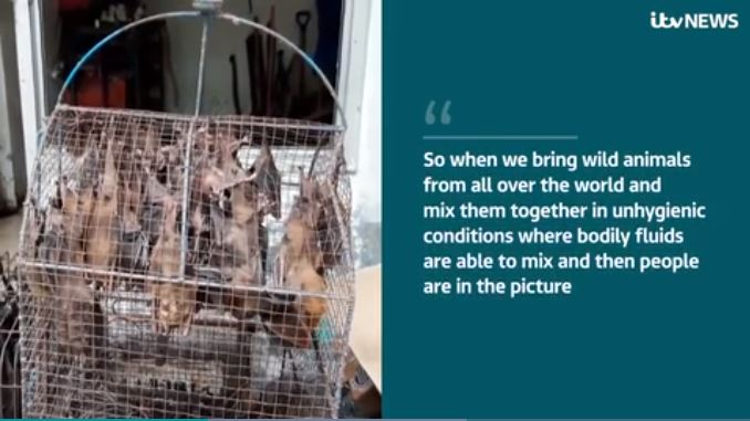 Bats in a cage for wildlife trade