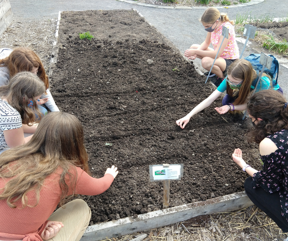 Several Gaia Circle participants plant seeds in a garden bed at ICG