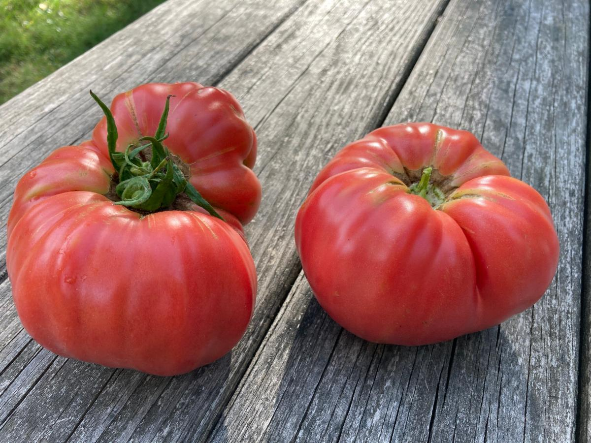 Ripe, red heirloom tomatoes.