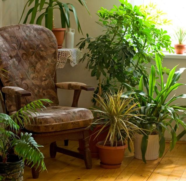 houseplants in home