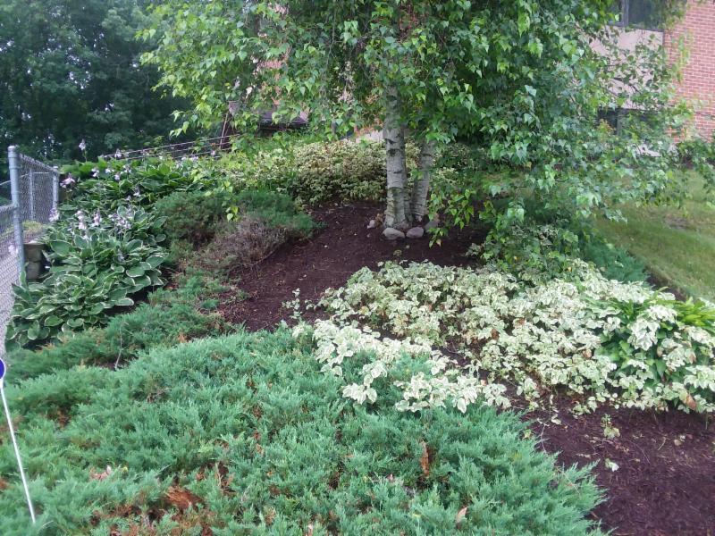 Corey's garden