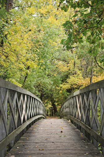 Walking bridge in the woods during the fall