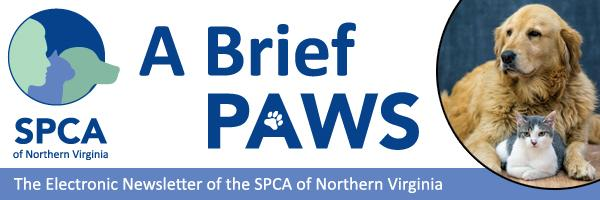 SPCA of Northern Virginia: A Brief Paws