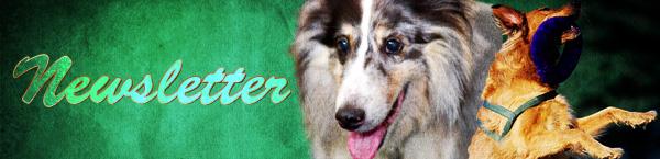 dog-newsletter.jpg