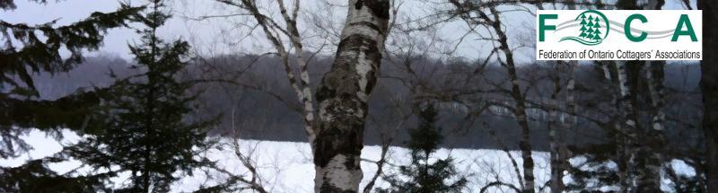 FOCA banner Winter Birch