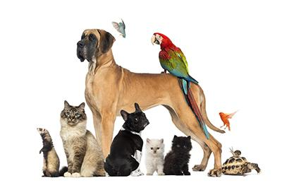 a collection of various animals
