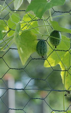 watermelon cucumbers