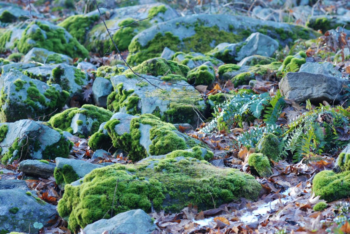 Lee Garden moss