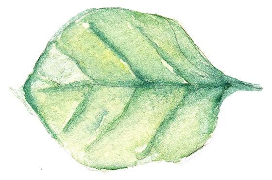 Leaf single divider