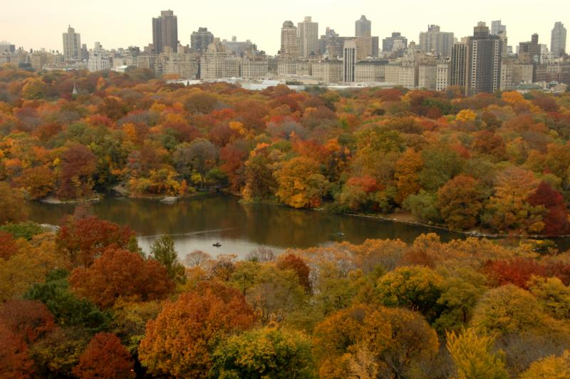 Central Park Aerial view autumn