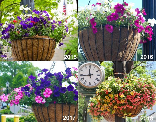 hanging baskets 4 years