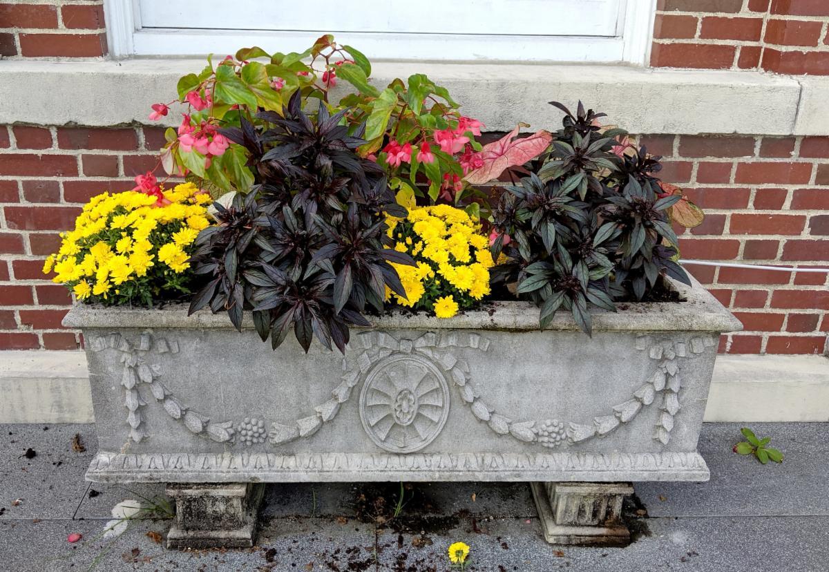 Main Street planters fall 2019