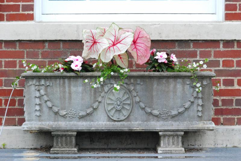 Town Hall front planter