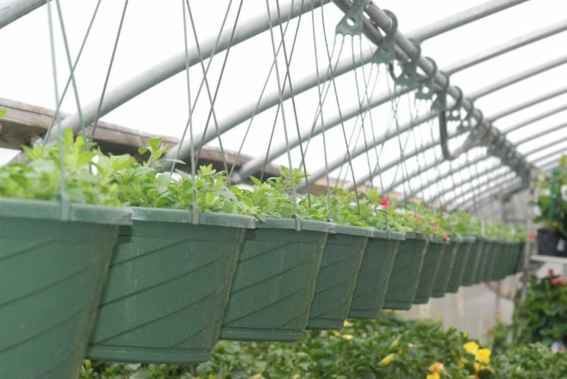 Hanging Baskets in a row