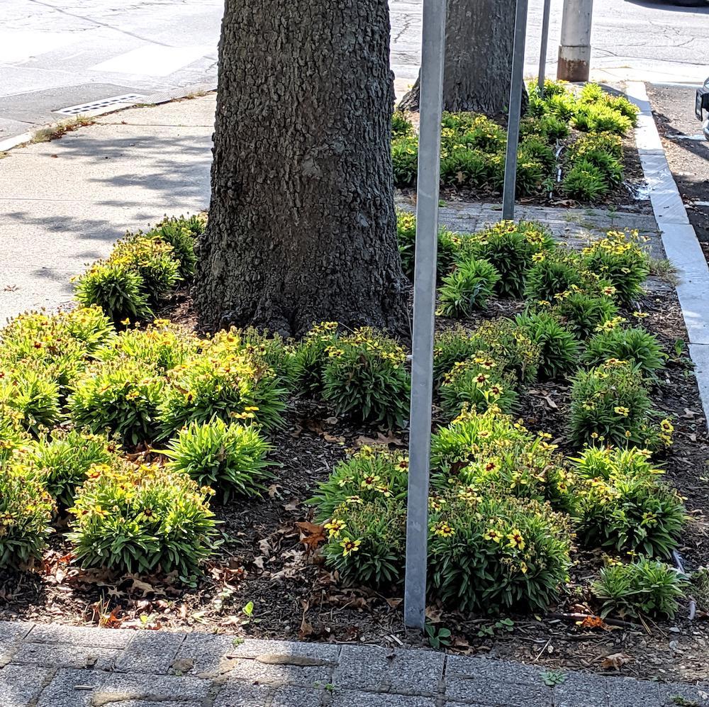Tree wells on Park Street