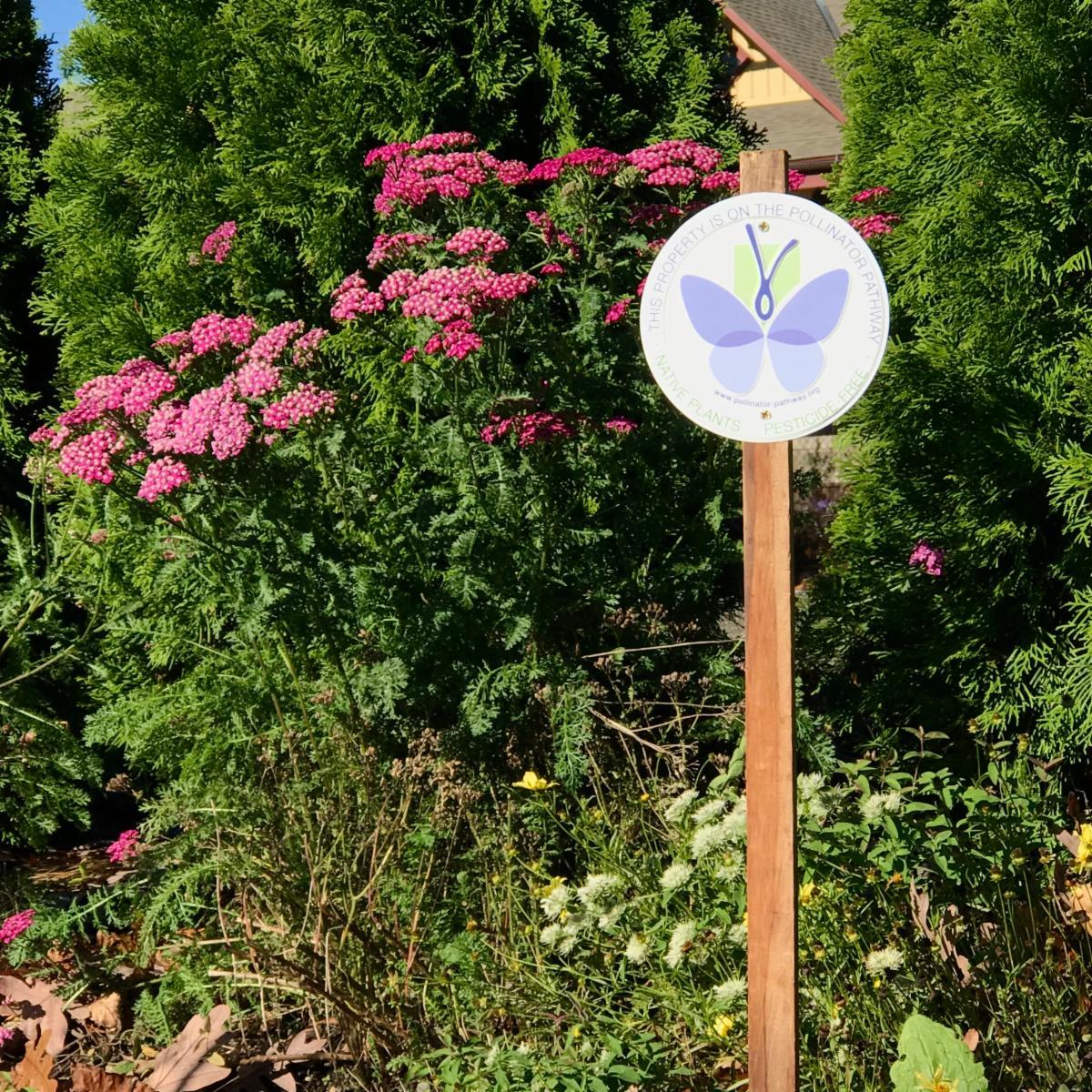 Post Office drop off pine street polliinator