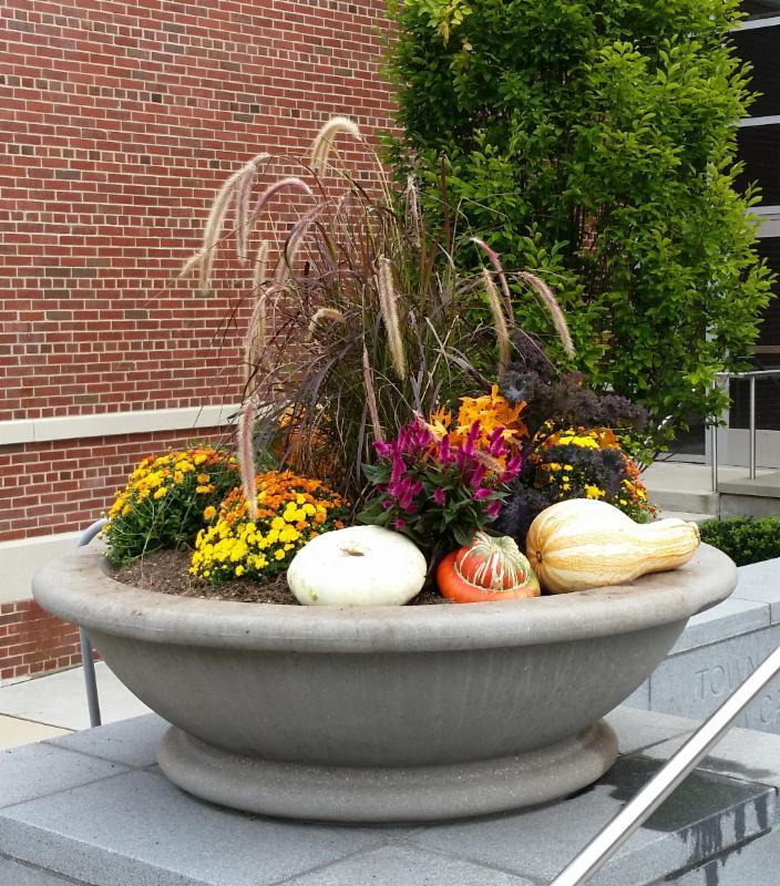 town hall planter fall 2016