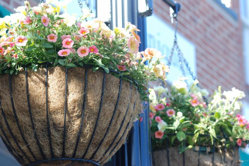 hanging baskets 2018