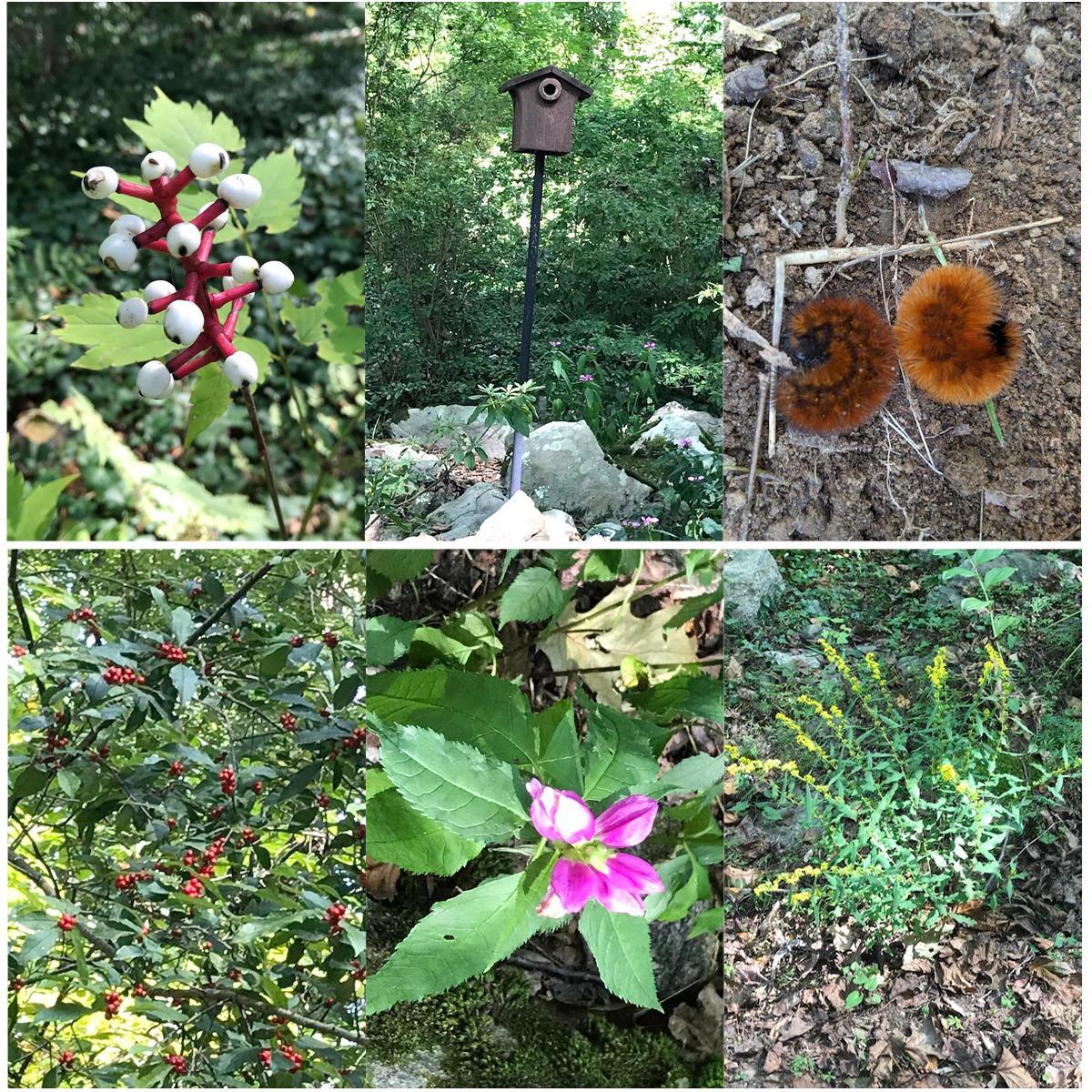 Lee Garden collage