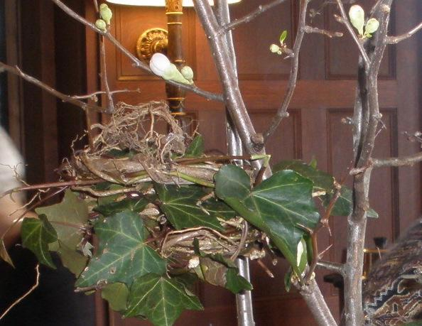 quince and nests
