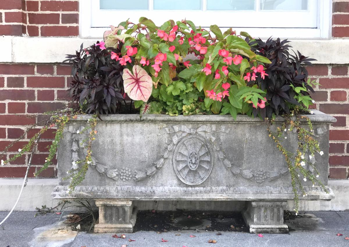 late summer town hall planter